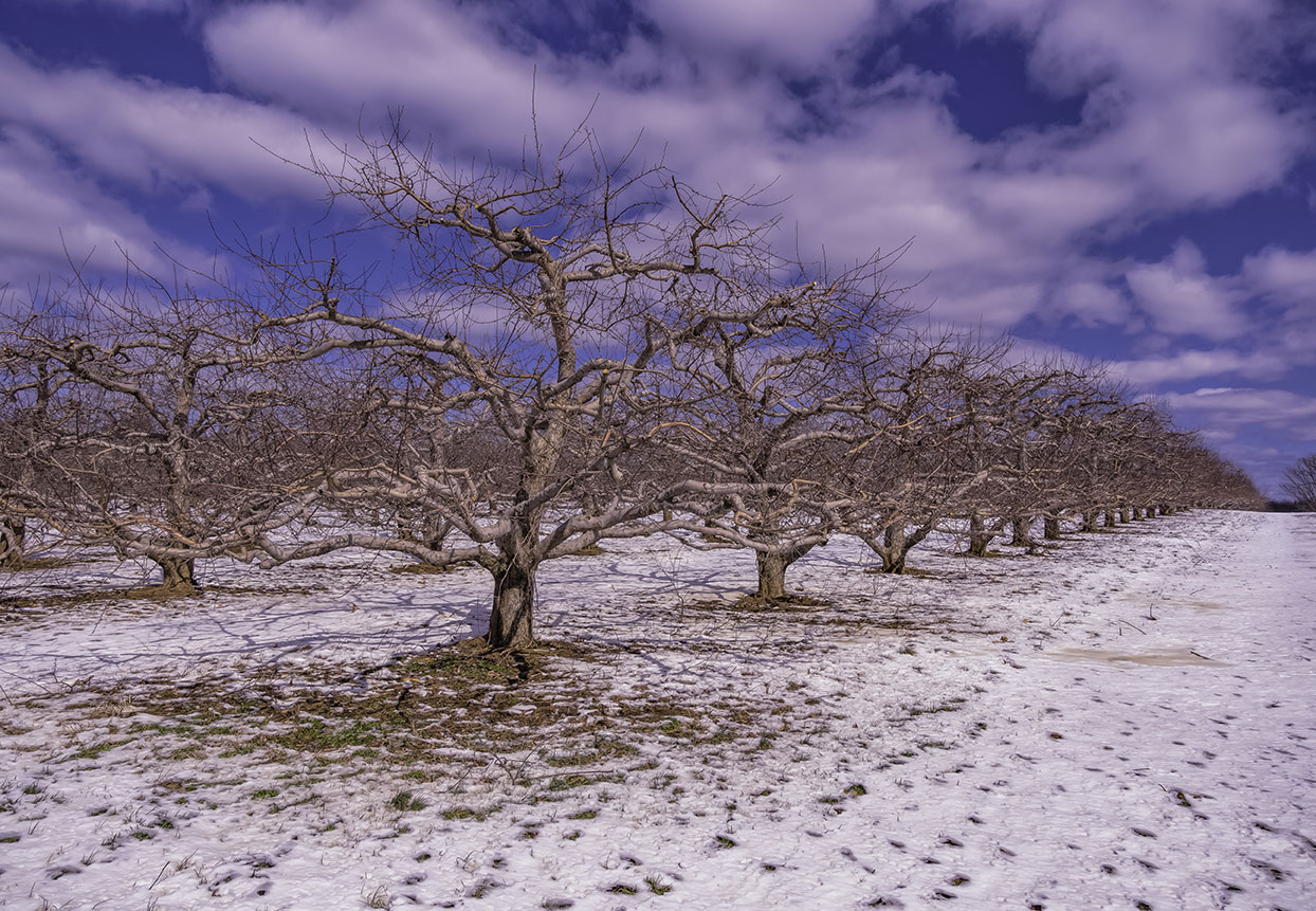 Monmouth-BattleField-Orchards-2